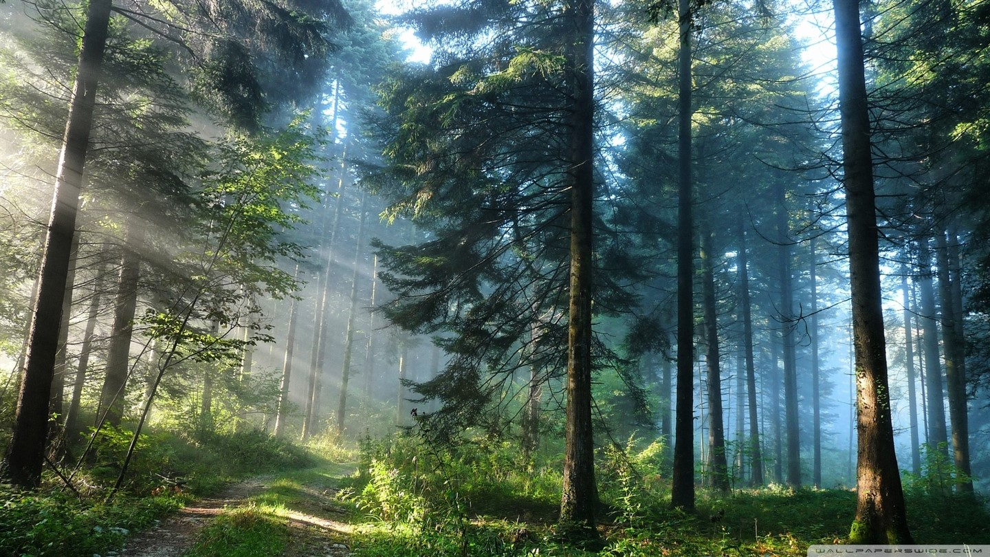 forest-wallpaper-017 (1440 x 810)
